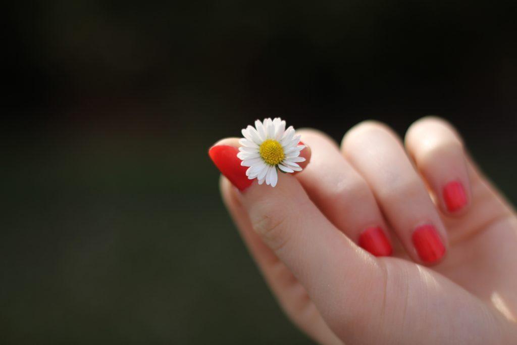 pexels-com-hand-daisy